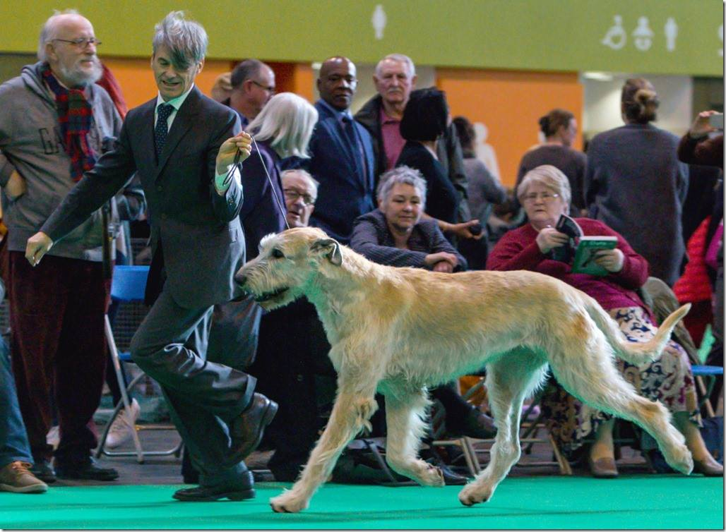 Crufts on the move